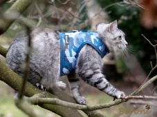 Cat Walking Jacket Beroni camouflage blau Katzengeschirr