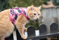 Cat Walking Jacket Beroni camouflage pink-rosa Katzengeschirr
